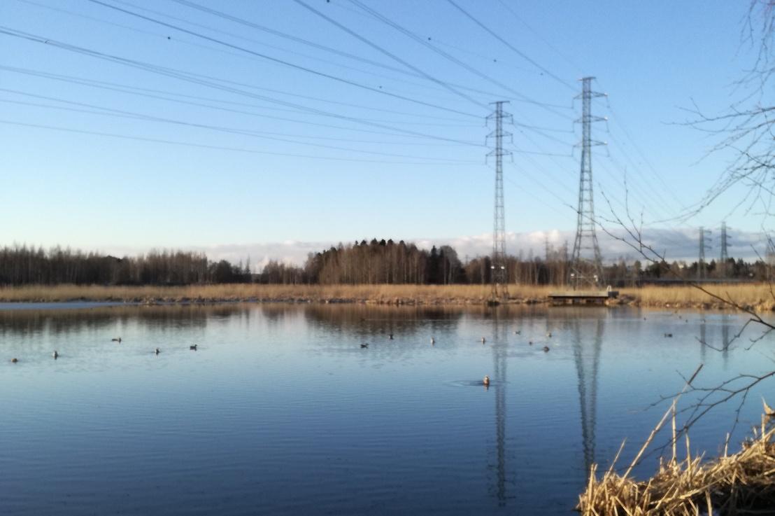 Valtuustoaloite: Suomenojan linnustoseurannat jokavuotisiksi